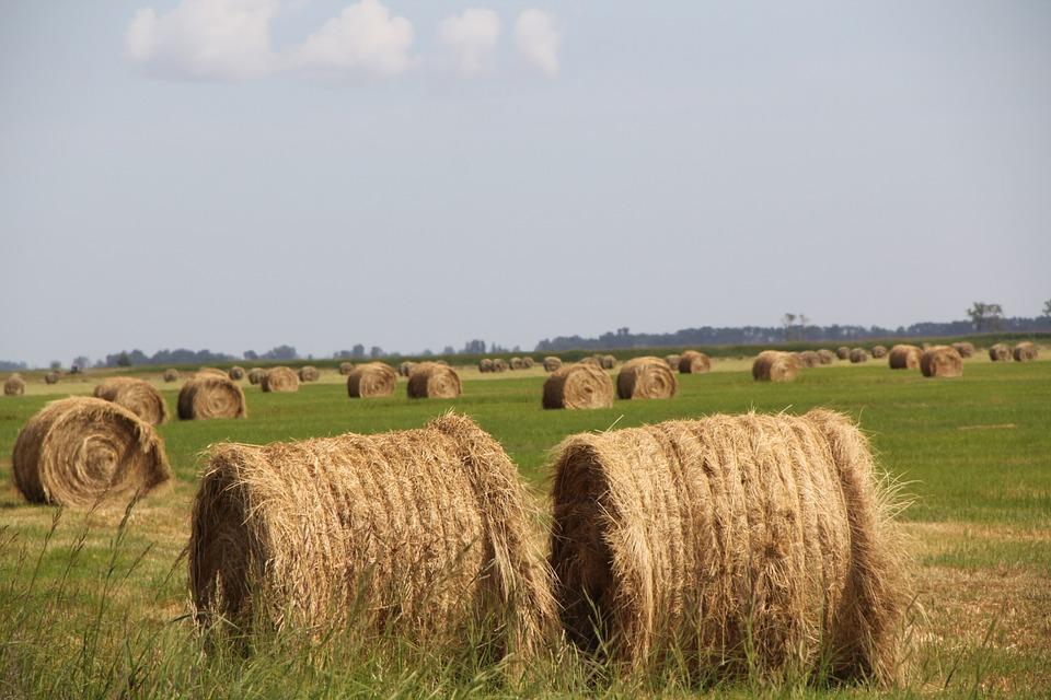A parlament előtt a törvényjavaslat, komoly könnyítéseket kapnak a magyar gazdák
