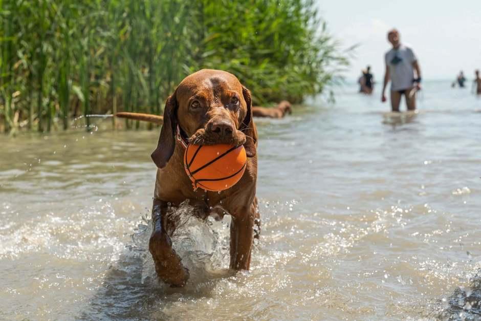 A kutyáddal strandolnál a Balatonon?